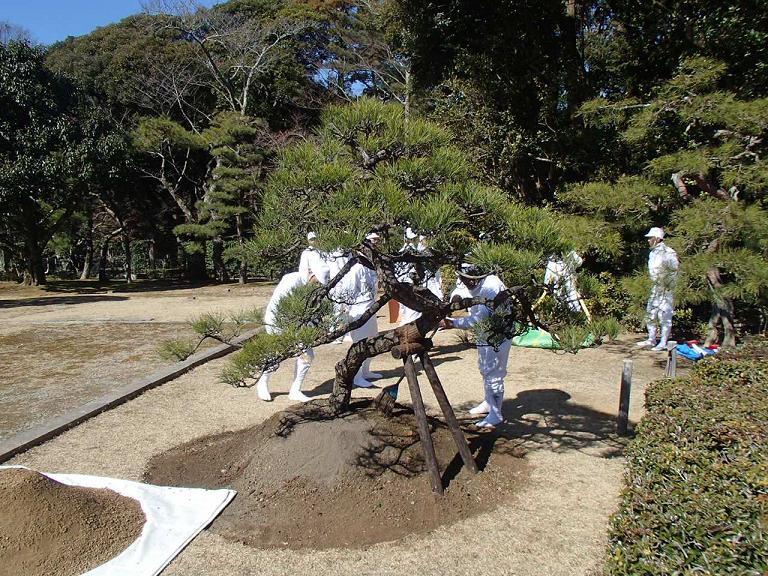 http://teraoengei.sub.jp/blog/uetuke.JPG